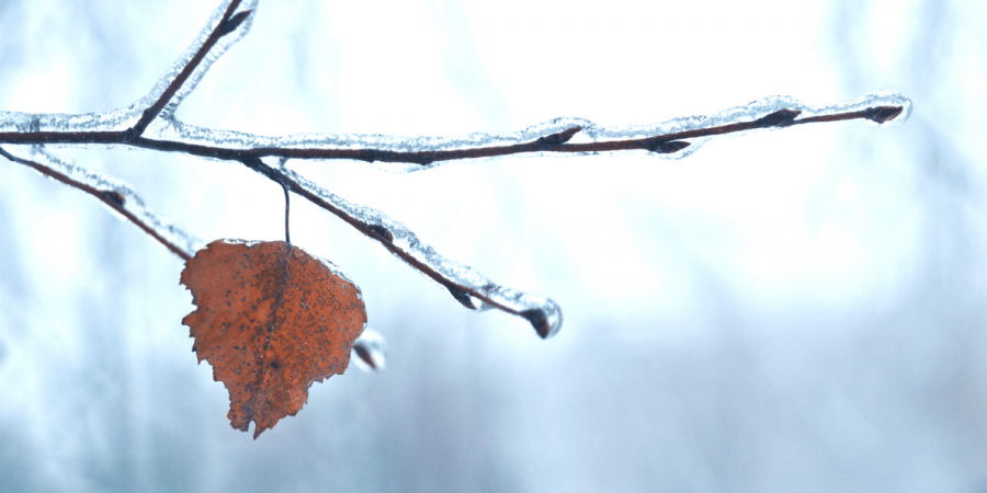 lonely frozen leaf
